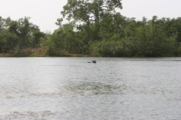 Jezioro i hipopotamy (podobno).